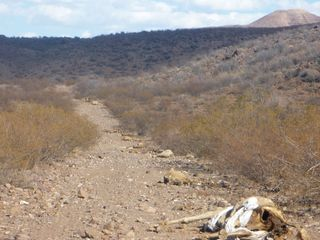 Death road, ejido alamos photo wspa