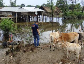 DANA observing animals in flood