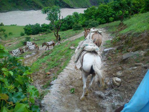 India-horses-flooding