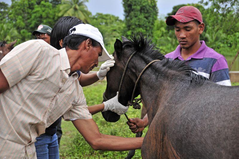 Demzy recibe capacitación sobre cuidados veterinarios básicos impartida por WSPA y ONGs locales.