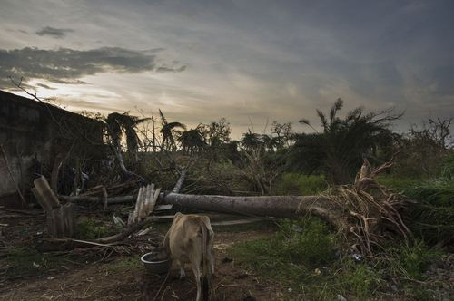 World Animal Protection - Animals in Disasters Blog: October