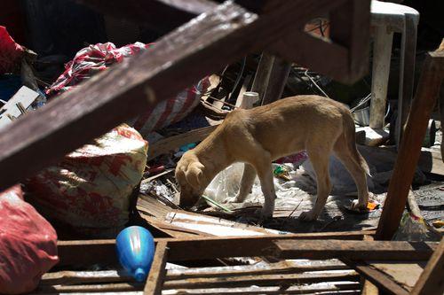 Dog in Guiuan, Eastern Samar