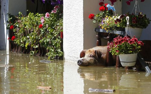 Pig Balkans flood - gebruiken tot 22 juni 2014