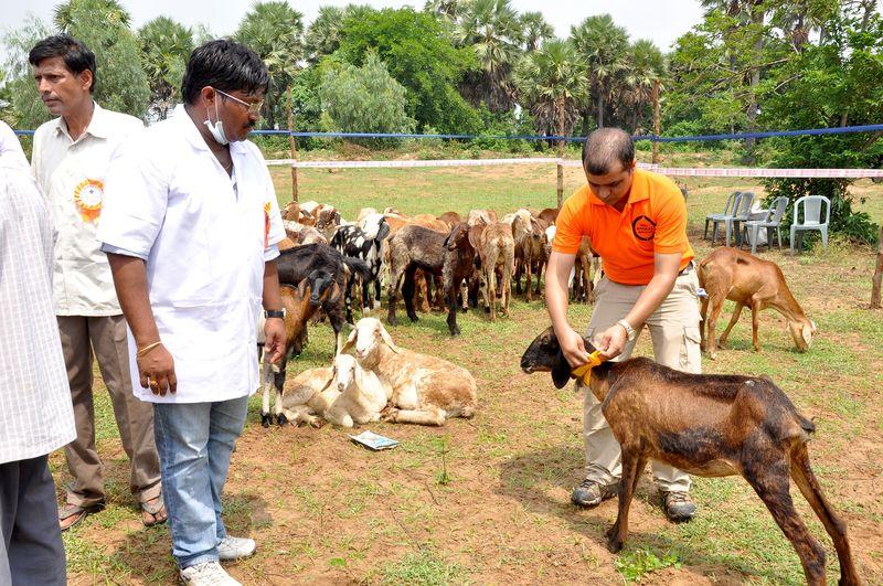 Animals officials staff 1
